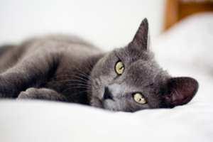 кошачий паразит вылечит от рака