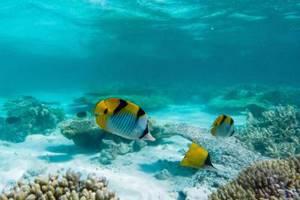 сознание у рыб