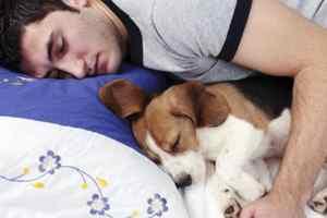 спасть с собакой в постели