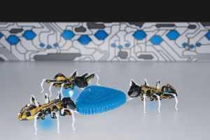 примеры биомиметики