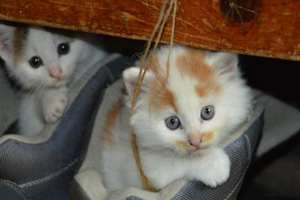 поведение котов в доме