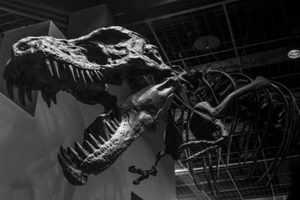 массовое вымирание динозавров