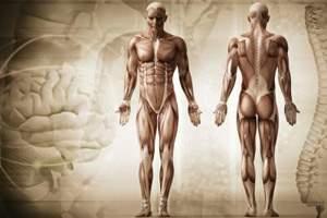 развитость человеческого организма