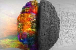два полушария мозга