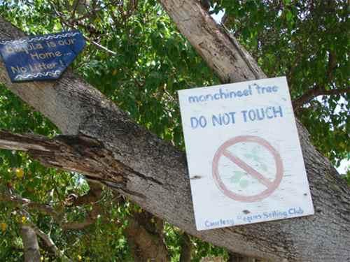 опасные знаки на дереве