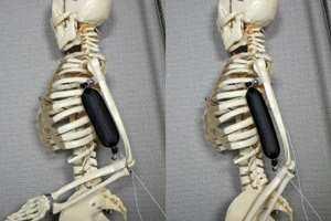 роботизированные мышцы