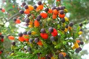 на дереве несколько фруктов