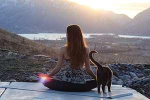 медитация с котом