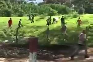 венесуэльцы гонятся за коровой