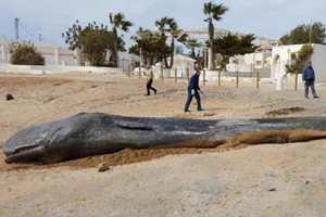 мертвый кит на берегу