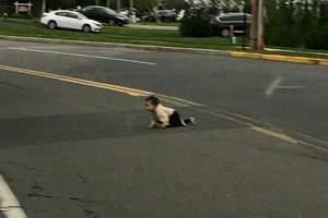 ребенок ползет по дороге