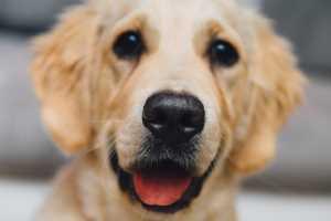 приятная мордашка собаки