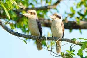 птицы обесточили город