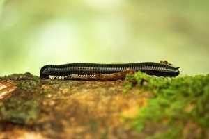 ползет червь