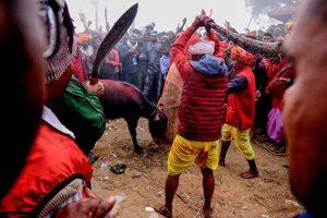 жертвоприношение животных в Непале