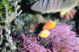 рыбы в кораллах