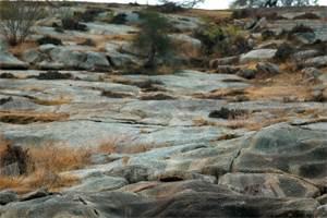 невидимый леопард на фоне скал