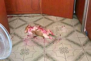 корги лежит на полу