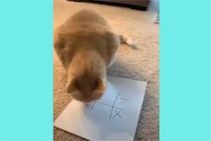 крестики-нолики с котом