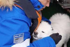 спасли собаку на льду