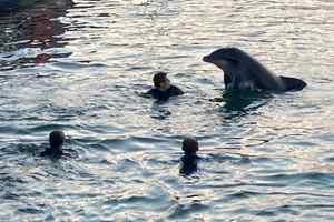 дружелюбный дельфин